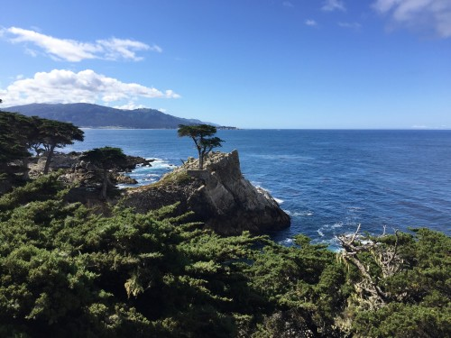 Lone Cypress at Pebble Beach's 17-mile Drive