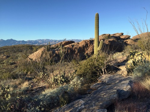 Saguaro National Park- so gorgeous!!